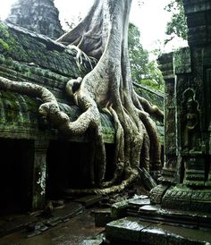 Mother Nature by THEuniverse  at Angkor wat Temple, Cambodia, 2004