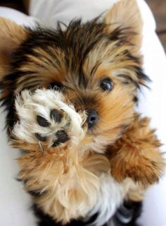 Give me a high paw