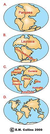 Continental Drift & Plant Distribution