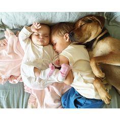 The Cutest Pet Friendships On Instagram