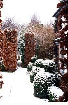 Topiary in Winter Garden