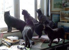 So many black cats. So beautiful. Neonwoman