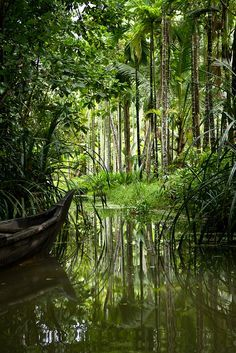 Kerala Backwaters - Kerala, South India.  It has numerous tour and travel destinations. The Kerala backwaters comprise of a chain of brackish lagoons and lakes lying parallel to the Arabian Sea line. http://ticketalltime.com/