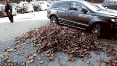 The crunch of leaves underfoot can be experienced just about everywhere.