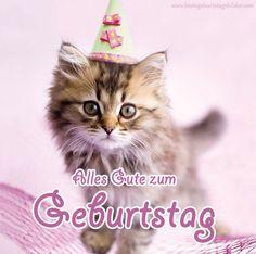 Herzlichen Gluckwunsch Zum Geburtstag Katzen Happy Birthday