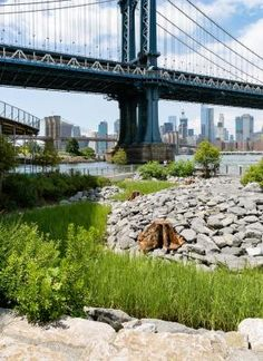 From its unique vantage point north of the Manhattan Bridge at a dramatic bend in the East River, John Street opens up vistas and waterfront space never before enjoyed by the public. Brooklyn Bridge Park, Manhattan Bridge, Pedestrian, Pathways, Landscaping, Construction, Street, Unique, Projects