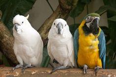 #formationanimaliere, #perroquet, http://www.educatel.fr/domaine/24-elevage-soins-aux-animaux/formations/120-auxiliaire-de-sante-animale