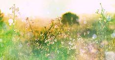 OIetko sinä jo löytänyt oman kutsumuksesi ja unelmatyösi? Joillekin se voi olla itsestäänselvyys, ja jos näin on, huomaat sen kyllä. Meidän muiden ei auta muu kuin lähteä tutkimusmatkalle itseensä. Summer Backgrounds, Landscape Background, Meadow Flowers, Ecology, Birds In Flight, Spring Flowers, Stock Photos, Abstract, Illustration