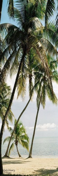 Photography beach woman palm trees 70 ideas for 2019 Honeymoon Places, Vacation Places, Dream Vacations, Places To Travel, Places To Go, Destinations, I Love The Beach, Tropical Beaches, Exotic Places