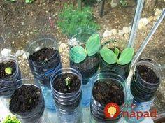 Bohatá úroda uhoriek v plastovej fľaši, je to jednoduché a môžete ich pestovať aj na balkóne! Vegetable Garden, Gardening Tips, Flora, Fruit, Vegetables, Gardening, Straws, Hydroponics, Lawn And Garden