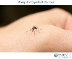 This page contains mosquito repellent recipes. Mosquitoes are a problem in many regions.