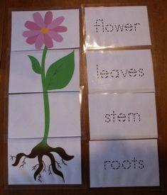 Spring Plant and Gardening Kindergarten Lesson Plan