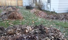 ways to use fallen leaves in your garden
