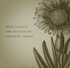 garden quotes How lovely the silence of growing things. Cactus Mexico, Plants Quotes, Quotes About Plants, Quotes About Gardens, Garden Quotes, No Rain, Brighten Your Day, Haiku, Wabi Sabi