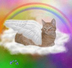 25 Things That Will Happen Now That Animals Can Go To Heaven