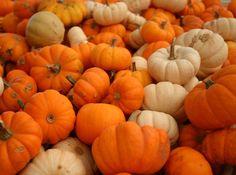 Pumpkins, Original Sin, and Bad Evangelical Illustrations