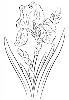 Blue Iris coloring page from Iris category. Select from 20946 printable crafts of cartoons, nature, animals, Bible and many more.