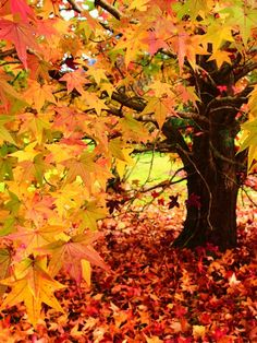 Tree bathed in gold