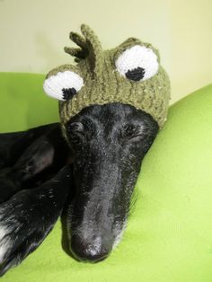 don't laugh.  this breed doesn't mind wearing hats.