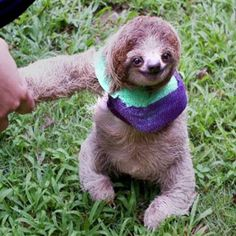 This poor baby sloth broke his arm, but it's on the mend!