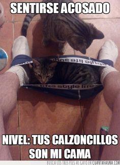 Los gatos no te dejan hacer tus cosas, siempre están ahí en medio