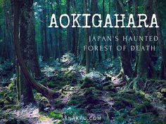 It's the most haunted and eerie places in Japan. Thousands of people have gotten lost or died in this forest. Take a look inside Aokigahara (青木ヶ原).