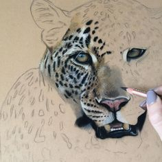"""4,655 Me gusta, 45 comentarios - Danielle Fisher (@danielleportraits) en Instagram: """"Progress on this beautiful face, big cats are so much fun to draw! Hope everyone has a great Easter…"""""""