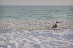 Destin, Florida....can't wait to take a bird picture when in Destin.  Hope it is a pretty of a pic as this one!!