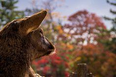 Herten spotten in Nara, relaxen in een Love Hotel in Osaka