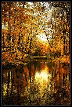 """""""Golden Nature"""" in Parc de la Tête d'Or, Lyon, France.  By Marie-Laure Clerget via Flickr."""