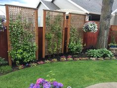 Looking forward to them being full of blooms! Privacy Landscaping, Outdoor Privacy, Backyard Privacy, Backyard Fences, Garden Yard Ideas, Backyard Patio Designs, Small Backyard Landscaping, Garden Privacy Screen, Privacy Screens