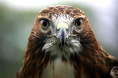 Why Hawk Luly got in a real flap - Recent Rescues - Turbary Woods