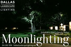 Imagine the subtle glow the world takes on when there's a #fullmoon - now imagine being able to have that #ethereal #illumination at the flip of a switch! Call #DallasLandscapeLighting for a free estimate on #Moonlighting ( #treeLighting ) 214-202-7474 http://www.dallaslandscapelighting.net/dallas-landscape-lighting/ #Dallas #LandscapeLighting #Moonlight #moon #outdoorlighting #treelights #dfw #frisco #plano #highlandparktx #parkcities #universityparktx