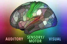Un nuevo mapa del cerebro identifica casi 100 áreas desconocidas - Quo