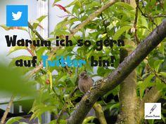 Bird Feeders, Twitter, Blog, Outdoor Decor, Plants, Animals, Infographic, Pictures, Animais