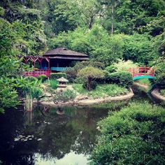 Gradina japoneza, gardina botanica Cluj-Napoca!
