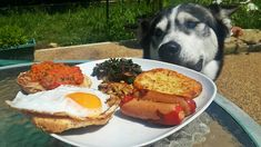 Here are 20 of the most spoiled pups celebrating Spoil Your Dog Dog Day! Food Dog, Spoil Yourself, Breakfast Of Champions, Dog Quotes, Dog Pictures, Dog Days, Pup, Treats, Celebrities