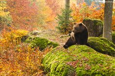 "morgondagg:  ""Bavarian forest colors"" by Peter Krejzl"