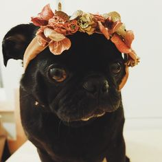 "pankunchiii: ""No, ma, I don't wanna be Lana Del Rey.. or go to coachella!"" (kamanaka)"