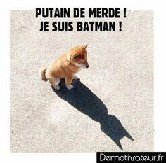 """""""Batman ! #demotivateur #chien #batman"""""""