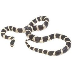 Go CSU! Disproving snake repellants. Great piece on how to keep snakes away.