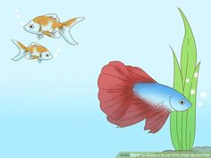 How to Grow a Bond With Your Betta Fish: 11 Steps (with Pictures) Baby Betta Fish, Beta Fish, Betta Aquarium, Betta Tank, Fish Care, Pet Clinic, Siamese Fighting Fish, Goldfish, Fly Fishing