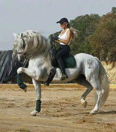 Azteca horse Pura Raza Espanola Yeguada Herrera Caballos Espanoles Caballos…