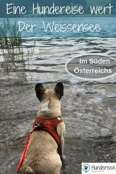 Am Weissensee in Kärnten ist gut Hundeurlaub machen. Hotel- und Wandertipps. Hund | Hundeurlaub | Urlaub mit Hund | Weissensee | Kärnten | Österreich Yorkie, Betty Boop, Day Trips, Animals And Pets, Boston Terrier, Camping, Hiking, Tours, Explore