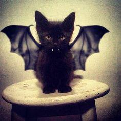 #KittyBat or is that #BattyCat