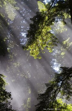 Sunlight filtering through, in the forest Mother Earth, Mother Nature, Tree Forest, Forest Light, All Nature, Walk In The Woods, Foto Art, Light And Shadow, Natural World