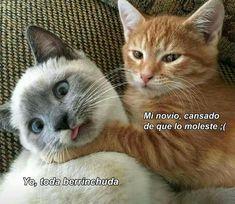 New meme compilation (cat memes,dog memes,pets memes,animal memes) Funny Animal Photos, Funny Animal Pictures, Funny Photos, Funny Cats, Funny Animals, Cute Animals, Humorous Cats, Cats Humor, Animals Images