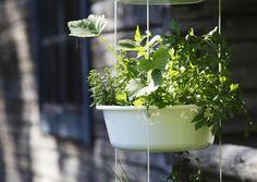 Tee kätevä yrttiamppeli pesuvadeista   Meillä kotona Diy And Crafts, Yard, Herbs, Plants, Gardening, Patio, Lawn And Garden, Herb, Plant