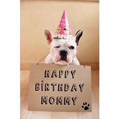 French Bulldog Birthday Card, via Batpig & Me Tumble It