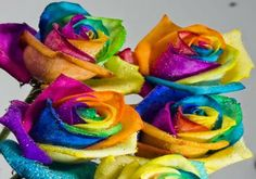 Rainbow Beautiful Flowers